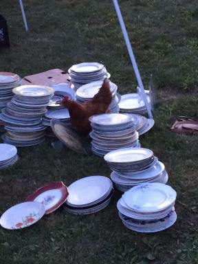 chickens and plates