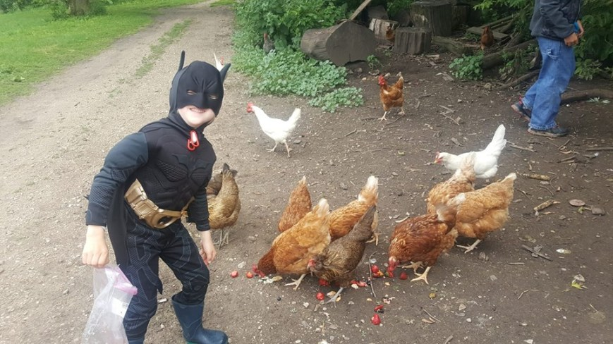 batman and chickens