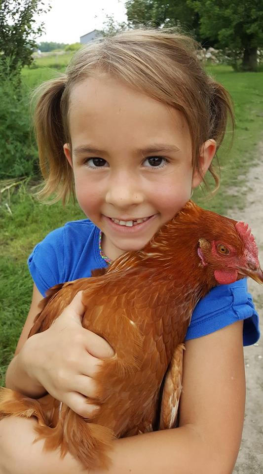 farm camp evelyn chicken
