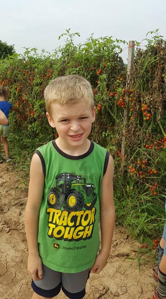 tomatoes farm camp